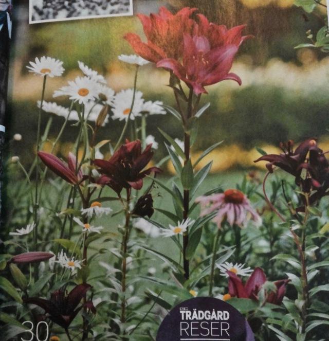Liljat, päivänkakkarat ja kaunopunahatut